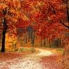 打倒食欲の秋 秋がダイエットにむいている理由