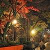 京都:夜8時の白川通り