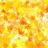 ポケカルのツアーで行こう!皇居「乾通り」秋の一般公開