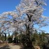 多摩川桜百景 -76. 光厳寺-