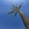 【旅行】Aloha Mahalo【帰国】