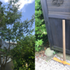 【北向き裏庭の庭づくり④】斜面の雑木伐採に目途,庭づくりを開始!~アンティーク調の物置設置&バチツルを使った開墾と植栽