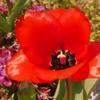 一日一撮 vol.532 家の花。身近な花