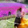 ドローン空撮『美女と野獣』Beauty & the Beast Japan日本中が感動に包まれる