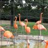 冬の上野動物園に行ってみた!!