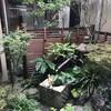 【箱庭】夏から秋へ