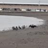 朝の浜辺でバードウォッチング?