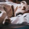 慢性睡眠不足なワタシが実践している「よく寝た!」と実感できる方法は超カンタン!