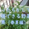 ずぼらの極み❤ 放ったらかしで毎年収穫できる野菜(春夏編)