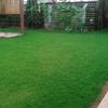 サボり気味の芝生