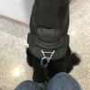 病院の待合室でおすわりできるけど、どこかは飼い主にひっついていたい犬。