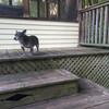 ウチの愛犬「GUCCI」はグータラです。
