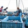 2019年5月24日 小浜漁港 お魚情報