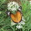 畑の昆虫4