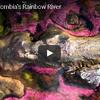 コロンビアの秘境にある知られざる七色の川