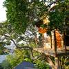 木の上で珈琲を楽しむツリーハウス「なんじゃもんじゃカフェ」はインスタ映えだぞっ! #なんじゃもんじゃカフェ