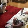 猫と孫の距離