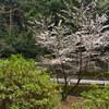 地元の桜めぐり「天野山 金剛寺」 Ⅰ