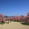 鈴鹿の森庭園(三重県鈴鹿市)