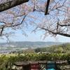 今年の桜♡