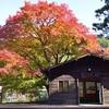 二ノ瀬駅の紅葉。秘境駅を彩っています。
