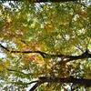 広島旅行撮影記 〜1日目  平和公園・原爆ドーム〜
