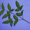 植物(ブルーバック) その1