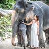 タイですから・・やっぱり象さんなんですね・・