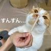 初めてのドギーマンの歯磨きおやつを食べてみました。