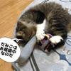 泥棒猫発見