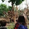 ハンブルクの動物園『Tierpark Hagenbeck』【ドイツ】