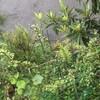 庭の緑が嬉しい