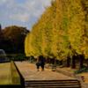 国営昭和記念公園の紅葉!