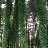 外国樹種見本林ちょっとだけ