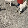 【都内発】日帰りドライブコース! ~栃木県那須編~ 入場無料施設あり!