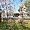 【京都】『醍醐寺』に行ってきました。京都旅行 京都桜 京都旅行 女子旅