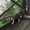 スウェーデンでやっと猫に出会った!Sodermalmの展望遊歩道で出会った猫(世界の猫探し66匹目)