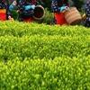 新茶がおいしい季節!日本三大茶処についてしらべてみた!