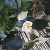 ランチョンマットイスラム模様と押し花コラボ2-2