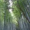 京都 嵐山の桜~2