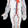 血行を促進させる走り方