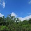 ◆'19/06/01     桑ノ木台湿原へ②…まずは のんびり林道歩き