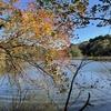 東京散歩: 石神井公園で紅葉散歩(東京の軽井沢で野鳥散歩、ランチ(エン座 / 井の庄)