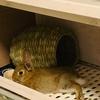 ちまきの食べているウサギの牧草とペレットとご馳走♪