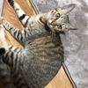 【猫ブログ】猫についての名言、格言!