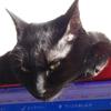 今日の黒猫モモ&白黒猫ナナの動画ー699