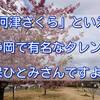 「河津さくら」といえば静岡で有名なタレント久保ひとみさんですよね。