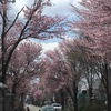 令和の初参拝〜帯廣神社