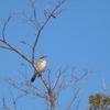 早朝、けたたましい鳥の鳴き声がうるさい!正体がわかり複雑な気持ちに・・・