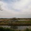 木更津のミステリー・サークル(浸透実験池跡)